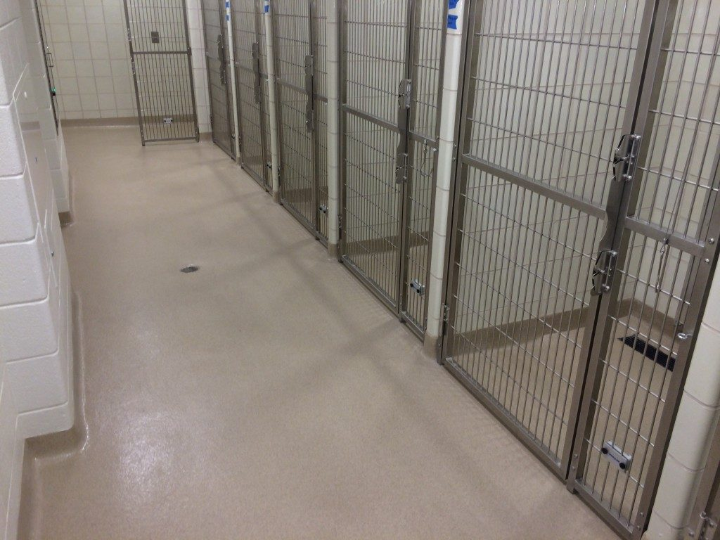 resin flooring in kennels