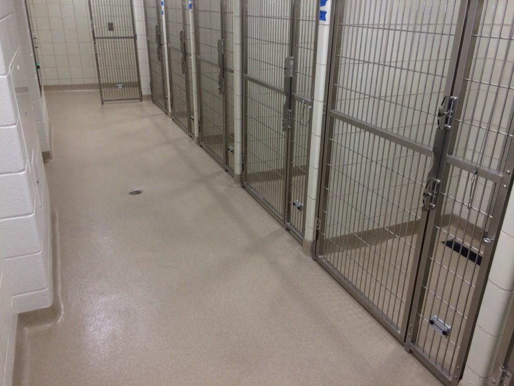 resin flooring in kennels